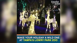 Christmas in the Wild at Tampa's Lowry Park Zoo | Taste and See Tampa Bay - Video