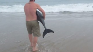 Incredible Rescue of Young Dolphin Caught on Camera - Video