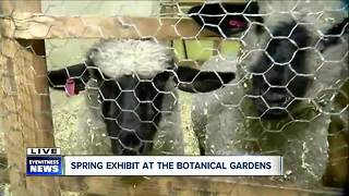 Buffalo and Erie County Botanical Garden welcomes spring - Video