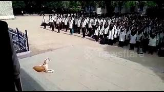 Stray Dog Sings Indian National Anthem With School Children Every Day - Video
