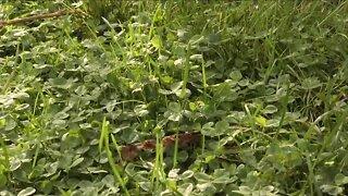 MANAGE WEEDS AND IMPROVE YOUR LAWN