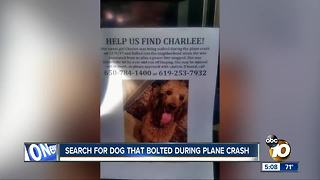 Dog missing after plane crashes into neighborhood - Video