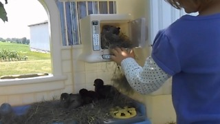 Girl Has A Toy House Full Of Birds! - Video