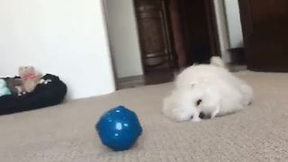 Puppy has fantastic time with new toy