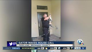Gator found at doorstep of Broward County home - Video