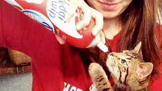 Cute kitten loves to eat whipped cream - Video