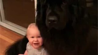 Massive dog and baby are best friends