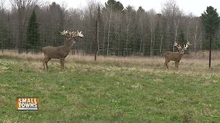 Small Towns: Whitetail preserve offers different hunting experience - Video