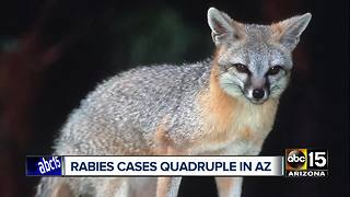 HEALTH ALERT: Rabies outbreak across Arizona - Video