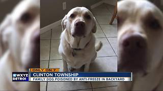 Clinton Township family searching for answers after someone poisons their dog - Video