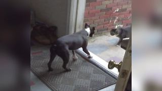 Unlikely Friendship Between A Dog And A Cat - Video