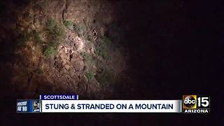 FD: Bees attack 2 hikers in Scottsdale - Video