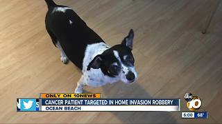 Dog mission after home invasion robbery