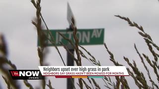 Neighbors upset over high grass at Lorain park - Video