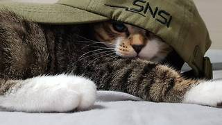 Cute kitten in a hat  - Video