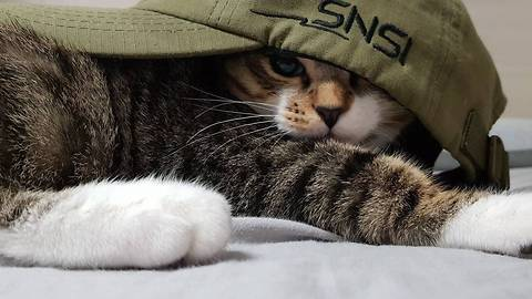 Cute kitten in a hat