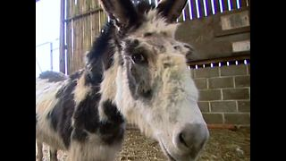 Dotty The Donkey Gets A Medal - Video