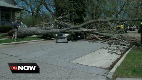 Tree falls on car in Dearborn, traps 81-year-old man