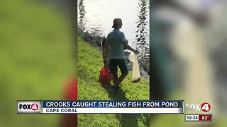 Three men climb gates to steal fish from pond - Video