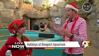 Adults can celebrate Christmas like kids at Newport Aquarium - Video