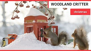 A top wildlife photographer has captured squirrels and birds getting in the Christmas spirit
