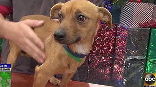HALO gives tips on keeping pets safe during New Year's Eve celebrations - Video