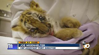 The sordid world of exotic animal smuggling - Video