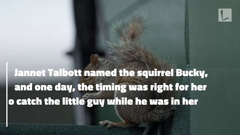 Woman Plucks Squirrel with Overgrown Teeth From Bird Feeder, Trims Them at Home & Saves His Life