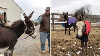 Donkey mother and son who were reunited in heart-melting video now inseparable after she nearly died of depression