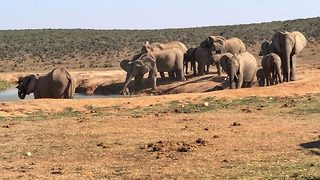 Amazing rescue mission as elephants rescue baby elephant from waterhole