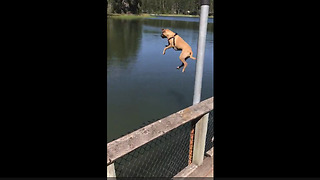Dog Gets Serious Airtime While Diving Into Lake - Video