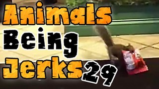 Animals Being Jerks #29 - Video