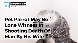 Pet Parrot May Be Lone Witness In Shooting Death Of Man By His Wife - Video