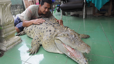 This Guy Has Adopted A Crocodile That Is Now A Member Of The Family