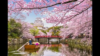 Cherry Blossom in Tokyo 2021 and latest updates on Japan 桜 さくら