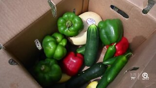 J&J Family of Farms relaunches $15 produce box distribution