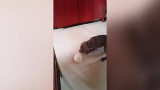 Hungry Dog Barks At Empty Bowl - Video