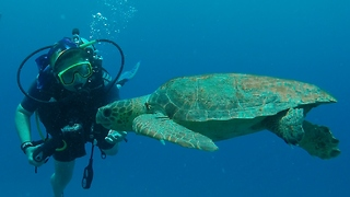 Incredible interaction between diver and sea turtle