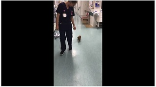 Happy Puppy Plays With Nurse At A Hospital And It So Funny To Watch