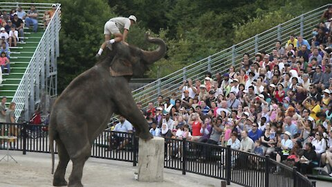 An Ontario Zoo Was Just Named The Worst In North America For Treatment Of Elephants