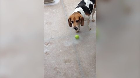 AWWW! | Beagle's Tennis Ball is Frozen to the Ground!