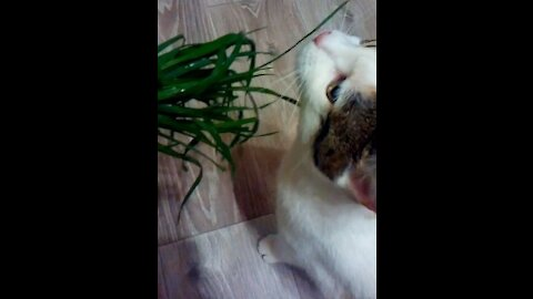 This grass is very tasty