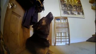 Hidden camera: Dogs' howling when they are left alone at home - Video