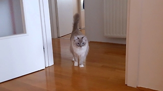 Extremely excited Cat plays energetically  - Video
