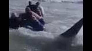 Men Push Beached Whale Back Out to Sea