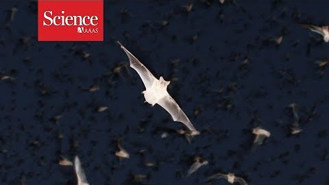 """Meet """"Chirocopter"""": A drone that flies within swarms of bats"""