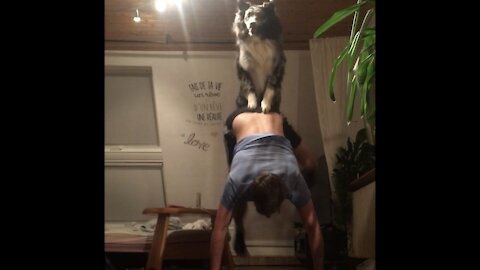 Goofy Australian Shepherd and his owner try out stupid tricks