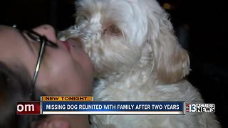 North Las Vegas dog reunited with owners two years later - Video