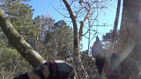 Don't look meow – Footage shows incredible rescue of cat stuck in 70ft tree for seven days