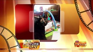 Art's Cameras Plus Picture of the Day for April 2! - Video